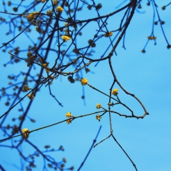 Fiori_gialli