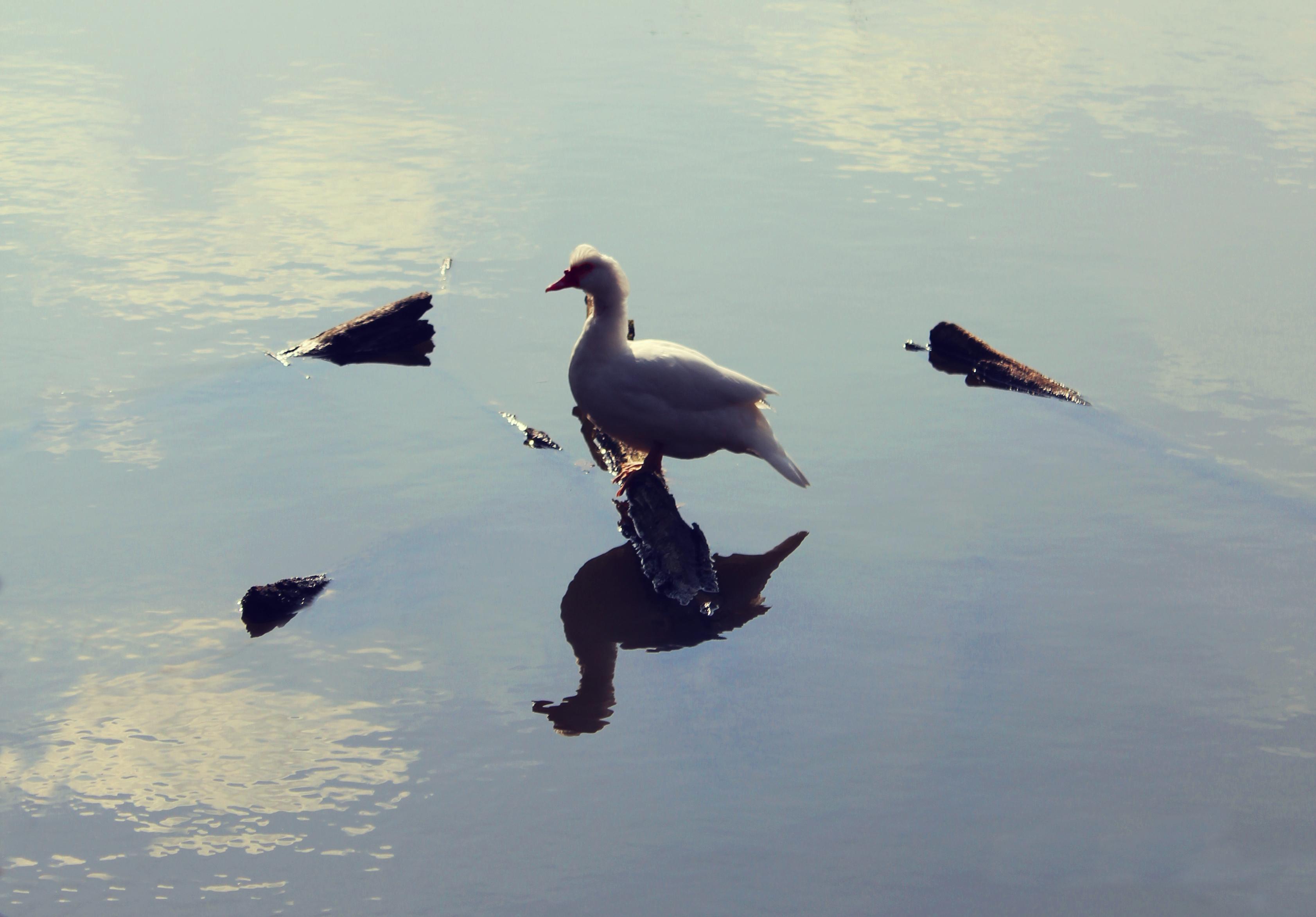 Risultati immagini per immagini per : più in là uccelli