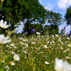 flower-meadow-2367408_1920